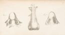 Был обнаружен медицинский сборник с картинками XIX века