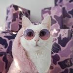 Хирурги призвали остерегаться кошек после имплантации груди